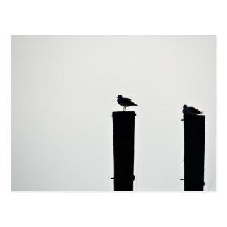 Carte Postale postcard seagull