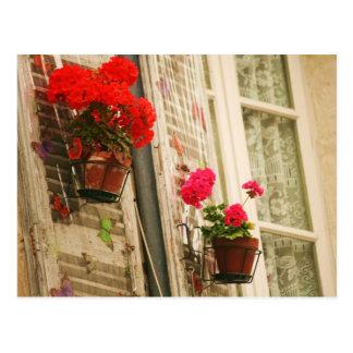 Carte Postale pots de fleurs