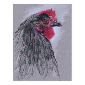 Carte Postale Poule noire d'Australorp