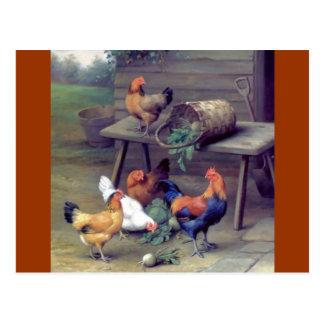 Carte Postale Poules de panier de navet de coq