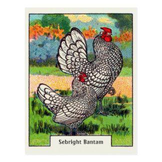 Carte Postale Poulet vintage de coq nain de Sebright