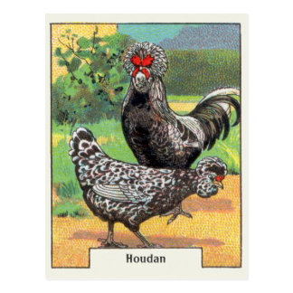 Carte Postale Poulet vintage de Houdan