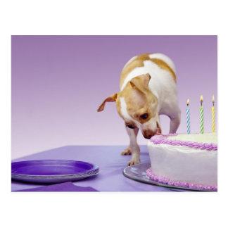 Carte Postale Poursuivez (chiwawa) manger le gâteau