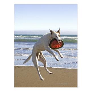 Carte Postale Poursuivez sauter pour attraper un frisbee sur la
