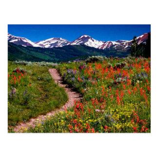 Carte Postale Pré de fleur sauvage du Colorado