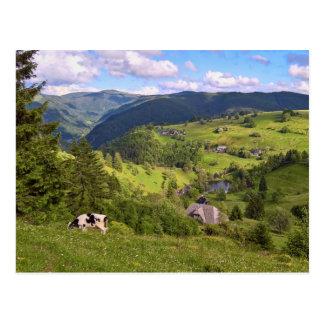 Carte postale : Prés et une vache avec un avis de