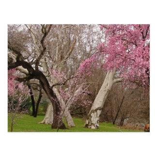CARTE POSTALE - printemps dans Chico, CA