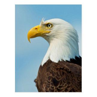 Carte Postale Profil d'Eagle chauve