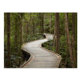 Carte Postale Promenade aux automnes du Nelson, Franklin -