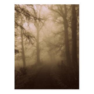 Carte Postale Promenade brumeuse de matin dans les bois -