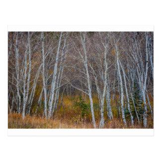 Carte Postale Promenade dans les bois