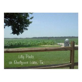 Carte Postale Protections de lis au lac Reelfoot, Tn