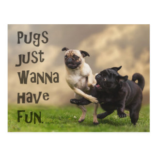Carte postale « Pugs justement wanna have fun ""