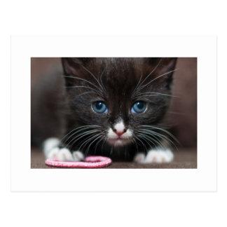 Carte Postale Puissance de chaton