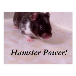 Carte Postale Puissance Noé, puissance de hamster de hamster !