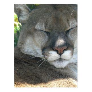 Carte Postale Puma