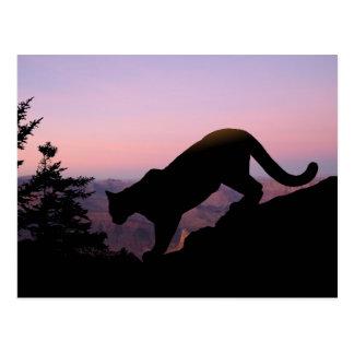 Carte Postale Puma et le canyon grand