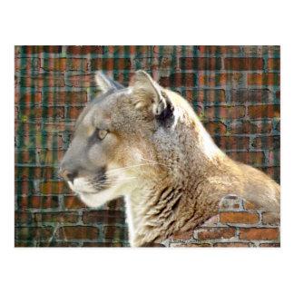 Carte Postale Puma/puma