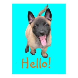 Carte Postale puppy malinois
