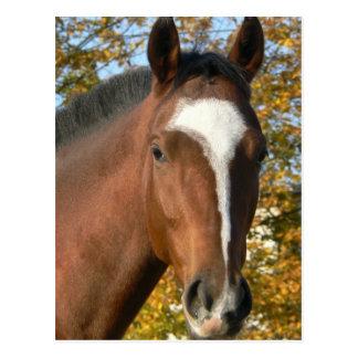 Carte postale quarte de cheval