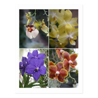 Carte Postale Quatre orchidées