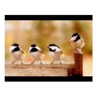 Carte Postale Quatre petits chickadees