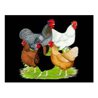 Carte Postale quintette Sexe-lié de poulets