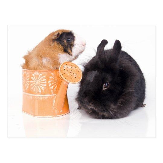 Carte Postale rabbit and guinea pig