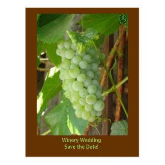 Carte Postale raisins, économies de mariage d'établissement