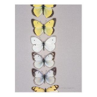 Carte Postale Rangée des papillons