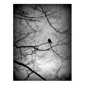 Carte Postale Raven