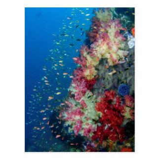 Carte Postale Récif coralien sous-marin, Indonésie