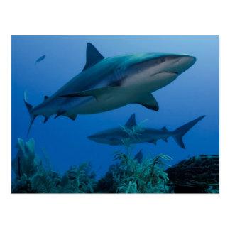 Carte Postale Récif des Caraïbes Shark Jardines de la Reina