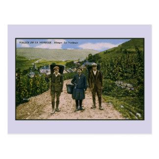 Carte Postale Récolte 1900 de vin de la Moselle Schengen
