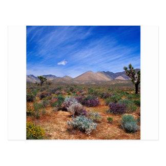 Carte Postale Région de conservation de fleur de déserts