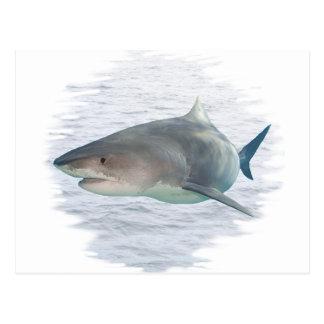 Carte Postale Requin dans l'eau