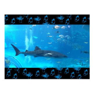 Carte Postale requin de baleine