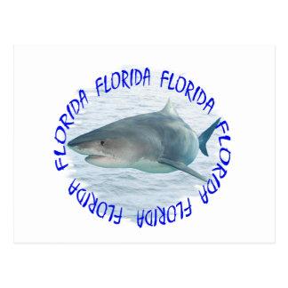 Carte Postale Requin de la Floride