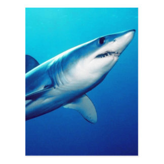 Carte Postale Requin de Mako de Shortfin