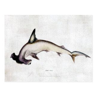 Carte Postale Requin de poisson-marteau