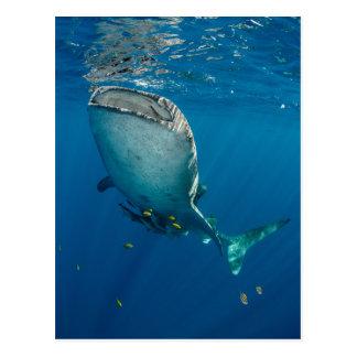Carte Postale Requin et poissons de baleine