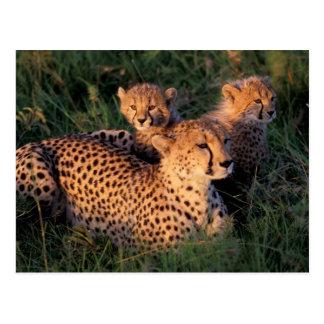 Carte Postale Réservation de jeu de l'Afrique, Kenya, Mara de