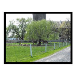 Carte Postale Ressort de ~ dans le ~ 36 du comté de Lancaster