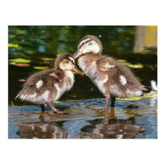 Carte Postale Ressort Duckies