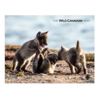 Carte Postale Ressort - Fox arctique