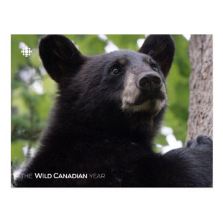 Carte Postale Ressort - ours noir