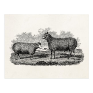 Carte Postale Rétro ferme de 1800s de moutons d'illustration