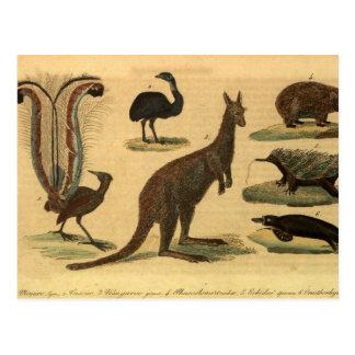 Carte Postale Retro Oceania animals