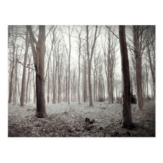 Carte postale rêveuse de région boisée