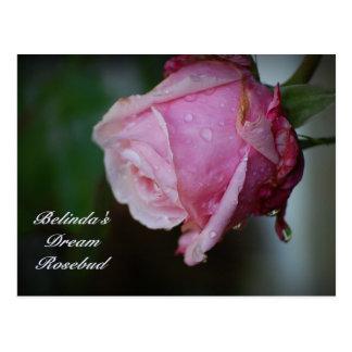 Carte postale rêveuse de Rosebud de Belinda
